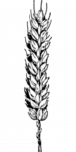 grano trigo macrobioteca macrobiotica zaragoza